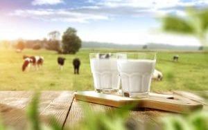 mcqueen dairies