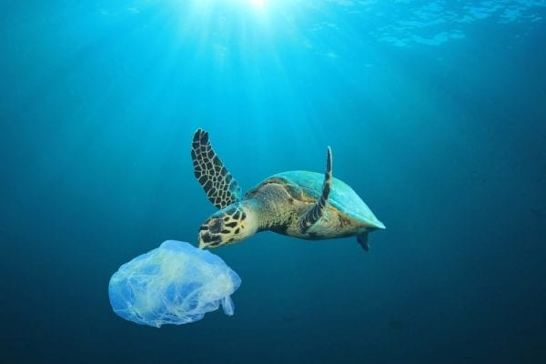 Plastic bag in ocean with Turtle