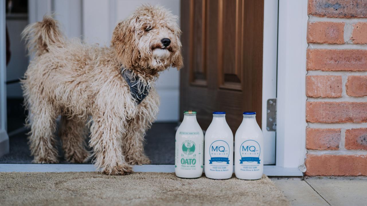 McQueens Dairies deliver Oato milk alternative in glass bottles