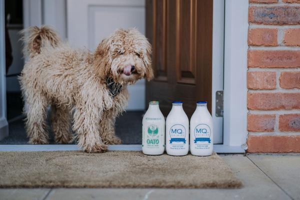 Dairy Intolerance